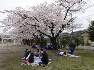 20190415ohanamikyuusyoku003.JPG