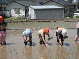 20100617shirokaki.jpg