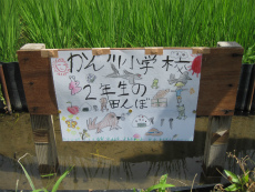 H250725kakashi07.jpg