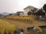 h261107inekari_4.JPG