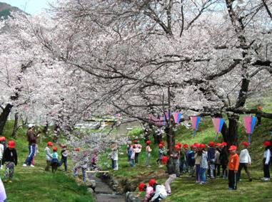2010.04.14.hanami.jpg