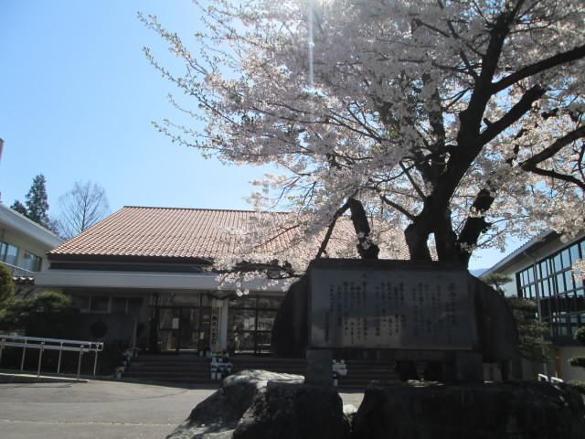 20170425sakura.jpg
